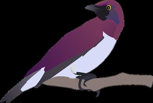 Birds, Purple, Stting, Tree, Branch, Looking Back
