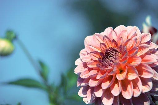 Flower, Purple, Blossom, Bloom, Plant, Flower Purple