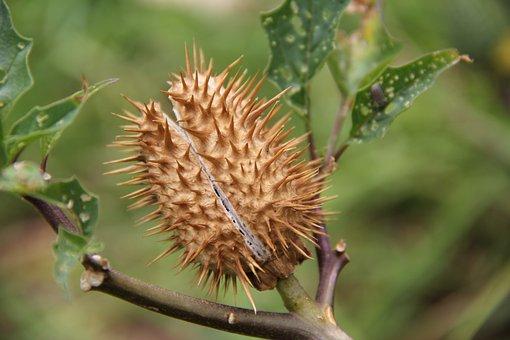 Thorns, Flower, Thorny, Yellow, Hawthorn, Desert