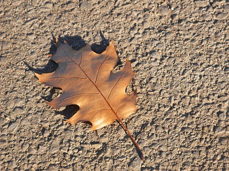 Leaf, Nature, Ground, Environment, Life, Plant, Real