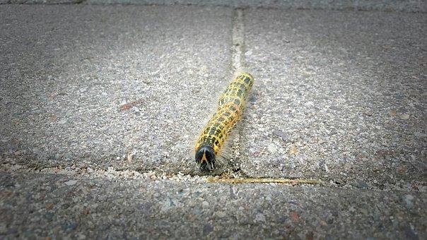 Caterpillar, Yellow, Nature, Ground, Animal, Vignette