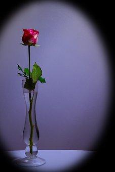 Rose, Red, Flower, Red Rose, Blossom, Bloom