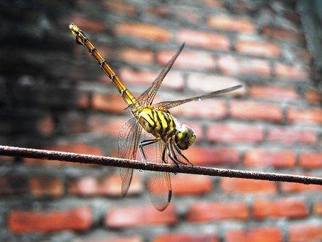 Dragonfly, Yellow, Orange, Wire, Wall, Brick