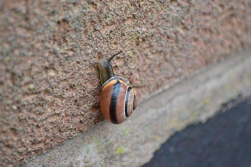Snail, Garden, Small, Brick, Climb, Nature, Close-up
