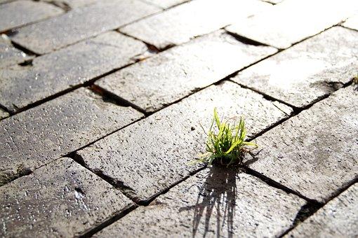 Street, Grass, Sidewalk, Light, Urban, City, Contrast