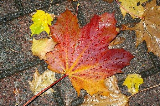 Autumn, Leaves, Nature, Wet, Fall Foliage, Fall Color