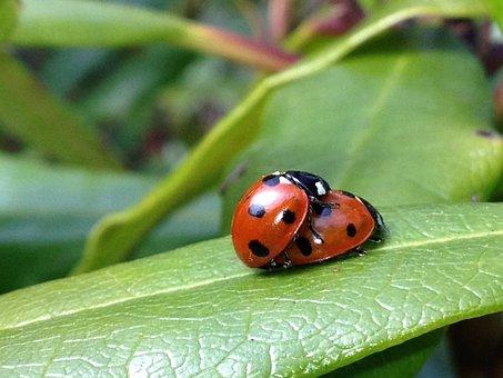 Ladybird, Ladybug, Leaf, Garden, Nature, Insect, Bug