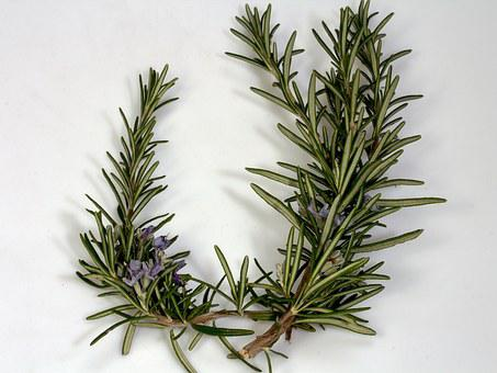 Branch, Rosemary, Blossom, Bloom, Spices, Blue