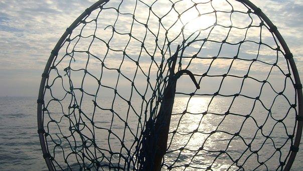 To Go Fishing, Sea, Landing Net