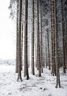 Tree, Winter, Snow, Nature, Tree Trunks, Landscape