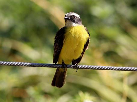 Colorful Bird, Bird On The Wire, Tropical, Ray