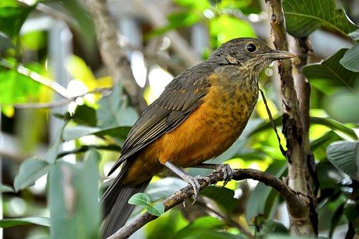 Bird, Creamy Orange, Under Observation, Forest