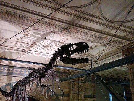 Dinosaur Skeleton Profile, Museum Shadow
