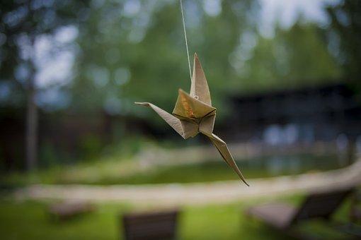 Nature, Birds, Bird, Living Nature, Natur, Spring