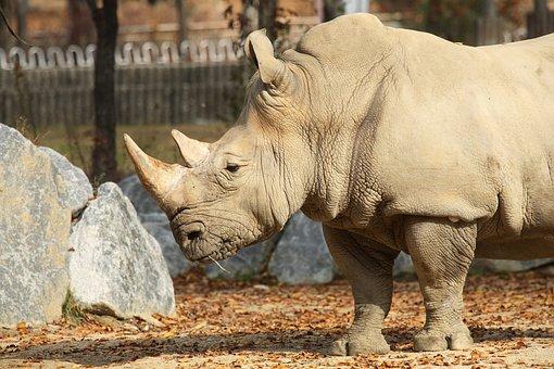 Rhinoceros, Animal, Zoo, Animal Porteait, One Horn