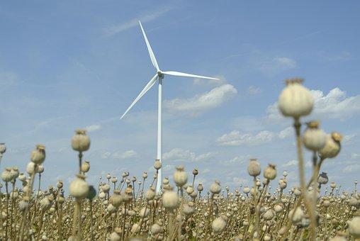 Energy, Poppyhead, Field, Heaven, Landscape, Nature