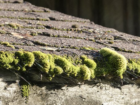 Moss, Covered, Roof, Asphalt, Shingles, Noture, Humid
