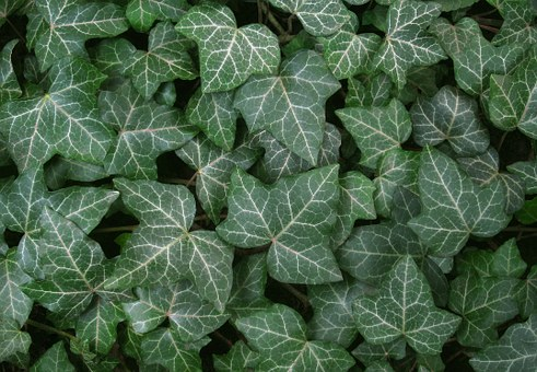 Leaves, Leaf, Plant, Green, Garden, Nature, Texture
