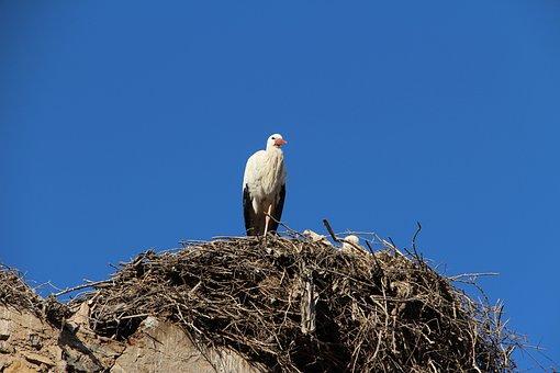 White Storks, African Bird, Large, Stork Nest, Kasbah