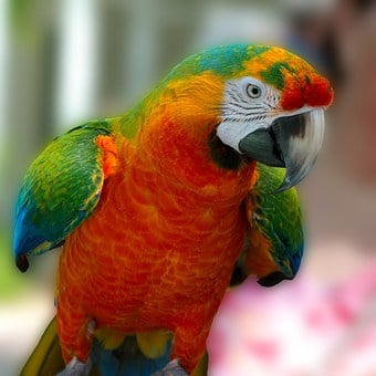 Macaw, Parrot, Bird, Hybrid, Green, Red, Blue, Orange