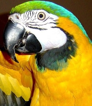 Macaw, Bird, Blue And Gold Macaw, Parrot, Exotic Bird