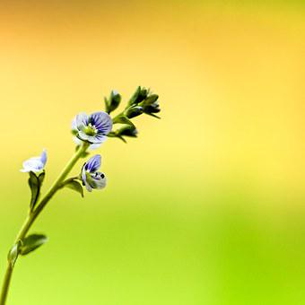 Flower, Tiny, Macro, Colorful, Plant, Bloom, Botany