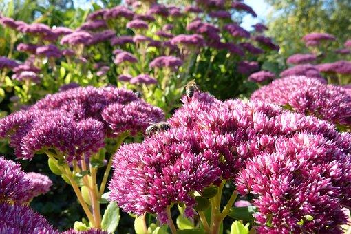 Fat Hen, Flower, Flowers, Bees, Close