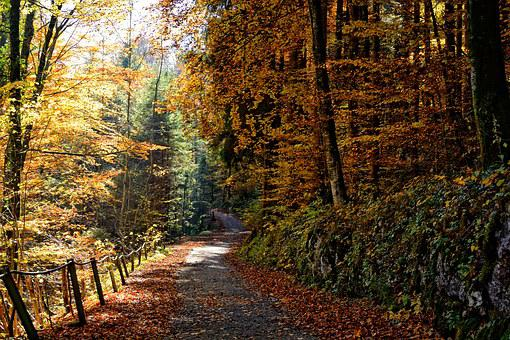 Autumn, Away, Forest, Trees, Nature, Leaves, Yellow