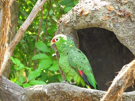 Parrot, Ave, Zoo, Guayaquil, Ecuador, Tropical Bird
