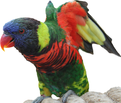 Isolated, Parrot, Bird, Macaw, Wing, Feather, Tropics