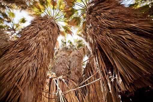 Usa, Palm Trees, 1000 Palms, Nature, Landscape, Jungle