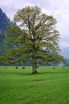 Spring, Tree, Individually, Nature, Meadow, Sky, Green