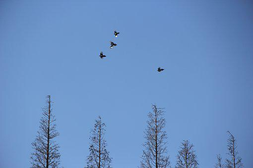 Fly, Bird, Trees, Woods, Artistic Conception