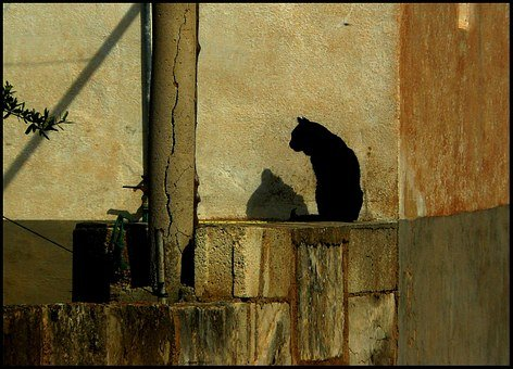 Cat, Black Cat, Domestic Cat, Animal World, Still