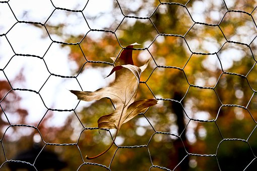 Leaf, Chicken Wire, Autumn, Fall, Fence, Leaves