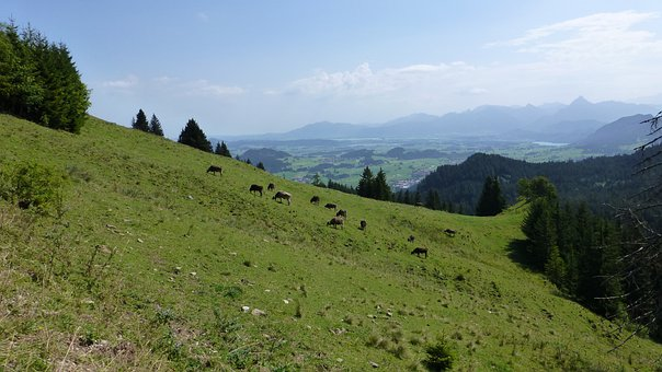 Allgäu, Kappeler Alpe, Meadow, Cows, Mountains, Lakes