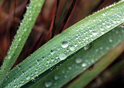 Drops, Kvilda, Nature, Sheet, Macro, Green