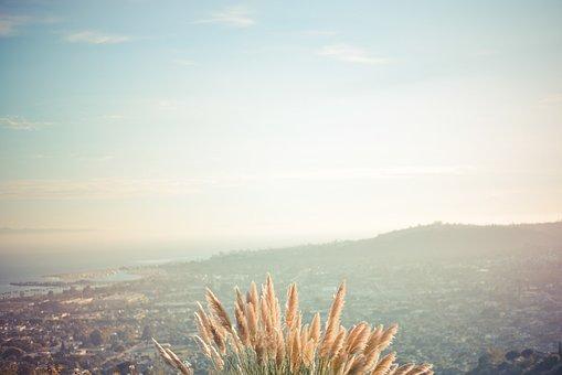 Wheat, Landscape, Mountains, Field, Nature, Summer