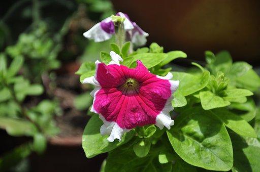 Flowers, Nature, Mageplantas, Garden, Red, Flower