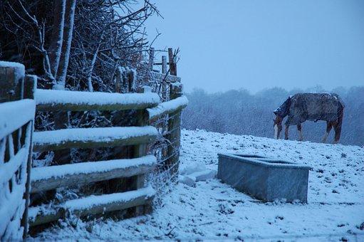 Brecon Beacon, Wales, Horse, Snow, Christmas