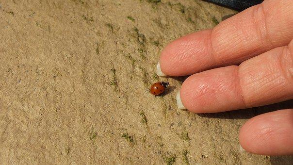 Ledybug, Hand, Insect, Friendship, Communication