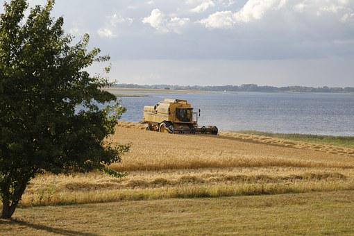 Barley, Field, Harvest, Fiord, Nature, Agriculture