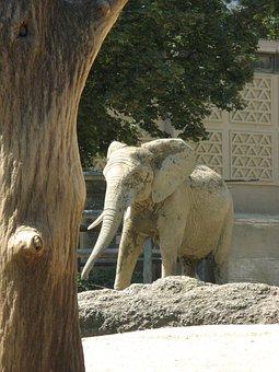 Elephant, Zoo Basel, Outdoor Enclosures, Elephant House