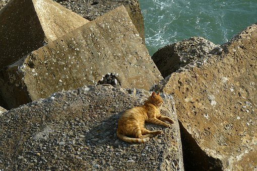 Cat, Animal, Pet, Domestic Cat, Animal World, Rest