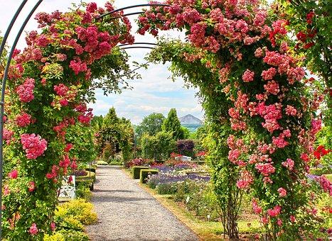 Europarosarium, Roses, Rose Garden, Sangerhausen