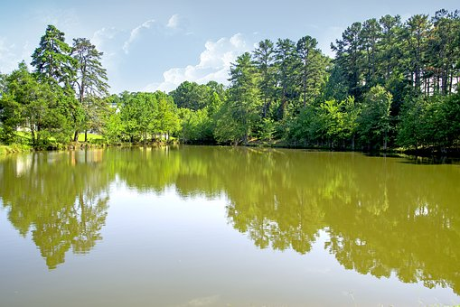 Lake, Green, Water, Sky, Reflect, Mirror, Scenery, Tree