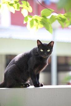 Black, Cats, Sitting, Alone, Animals, Mammals, Wildlife