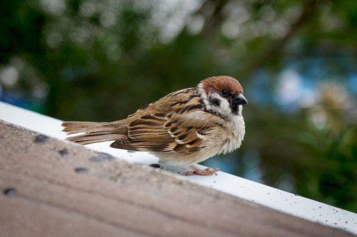 Hong Kong Ocean Park, Sparrow, Bird, Brown, Feather