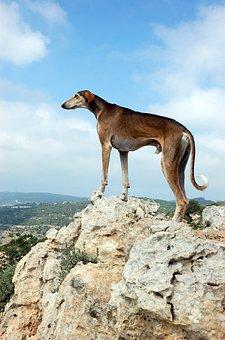 Dog, Worth, On The Mountain, View, Mountains, Rocks