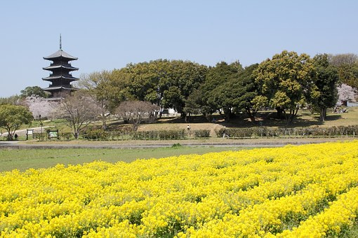 Kibi, Okayama, Rape Blossoms, Five Story Pagoda